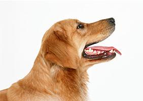 犬の口が臭いのは病気?治すのはカンタンなの?