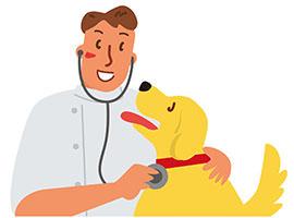 犬の部分的な抜け毛:虫さされが原因だった。治療法は無い?