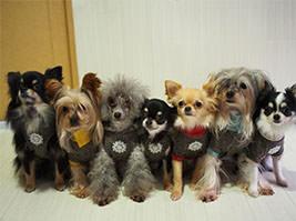 犬がしきりに舐める理由:動物病院で診てもらべき?
