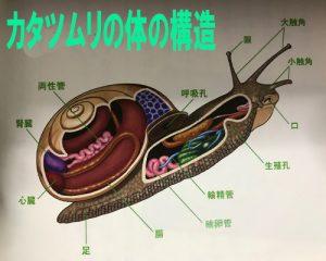 カタツムリの殻の構造