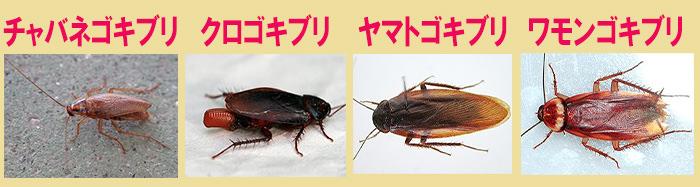 ゴキブリ 種類