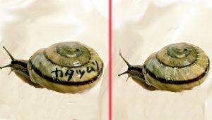 カタツムリ 殻 落書き