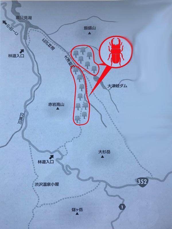 クワガタの採集場所・福島県