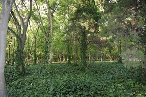 クワガタ 雑木林