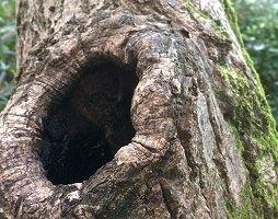 クワガタ 木の穴